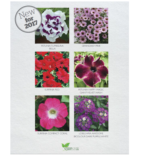 Channel Islands Plants Catalogue
